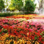 flores que gostam de sol