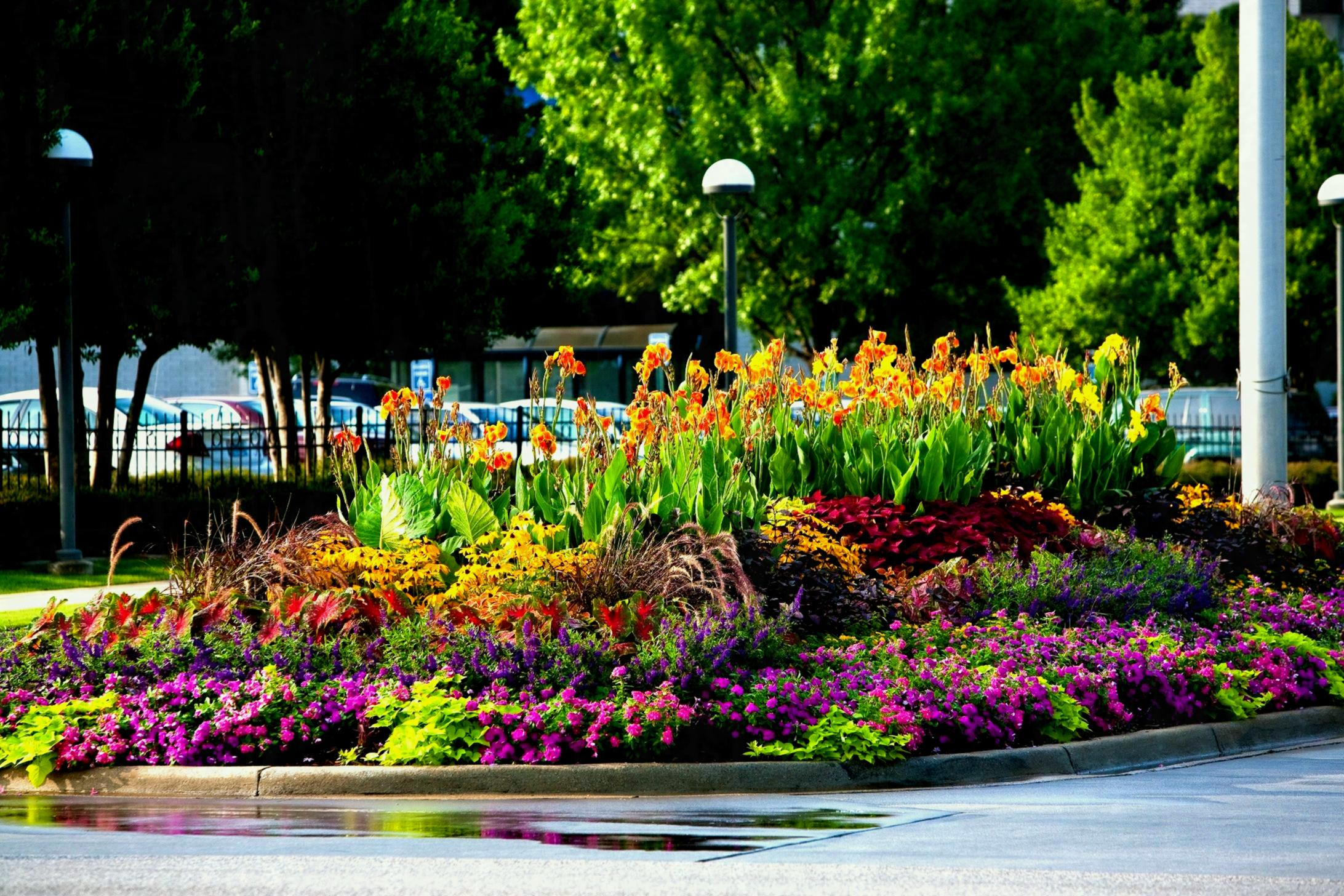 flores que gostam de sol : flor e sol