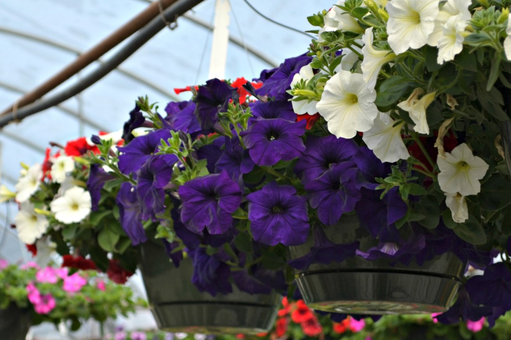 flores que gostam de sol : flores para jardim resistentes ao sol
