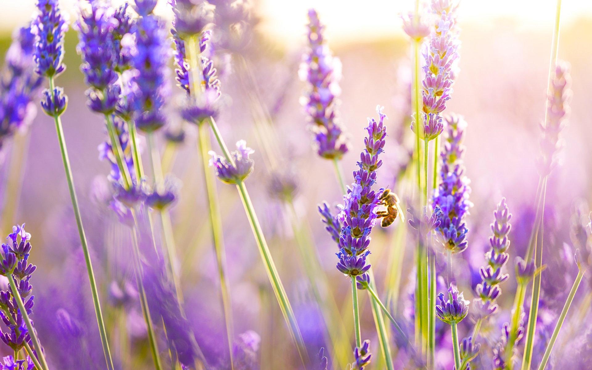 flores que gostam de sol : flores que resistem ao sol