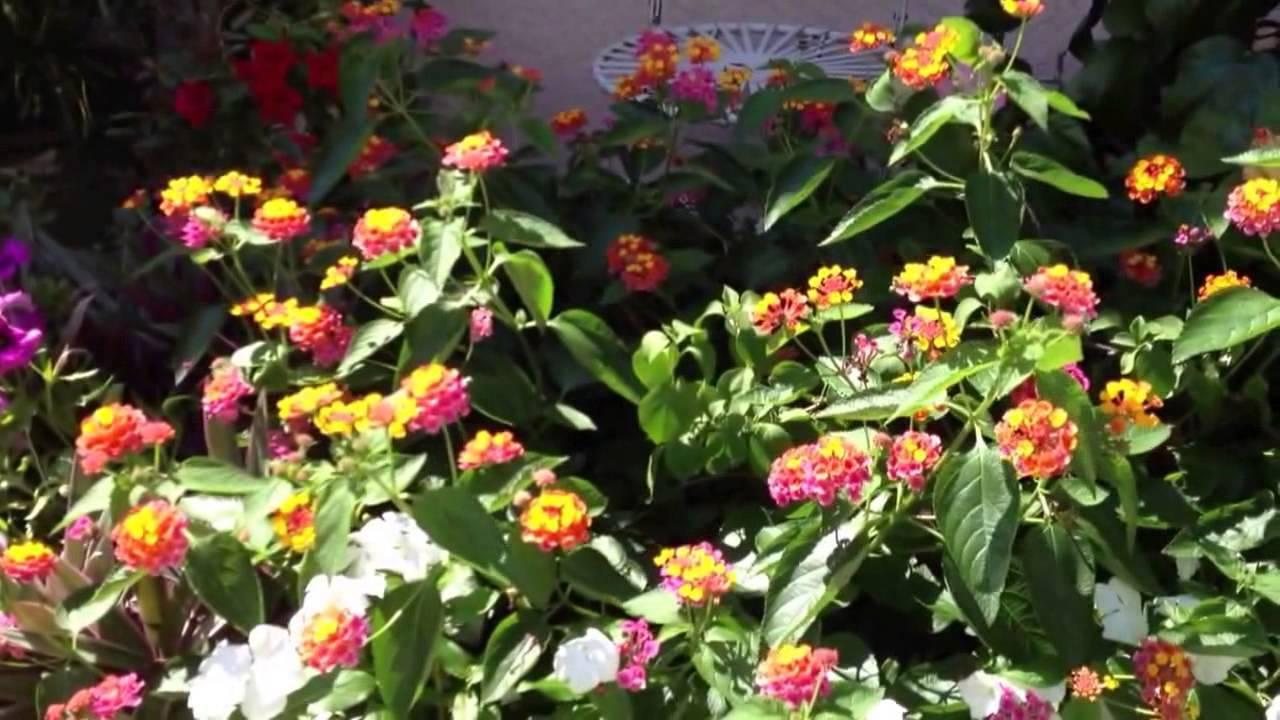 flores que gostam de sol : flores resistentes ao sol