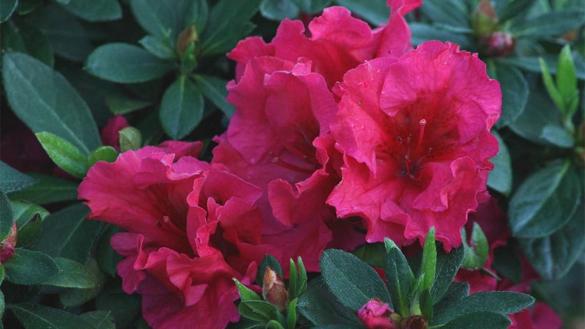 flores que gostam de sol : plantas para jardim resistentes ao sol