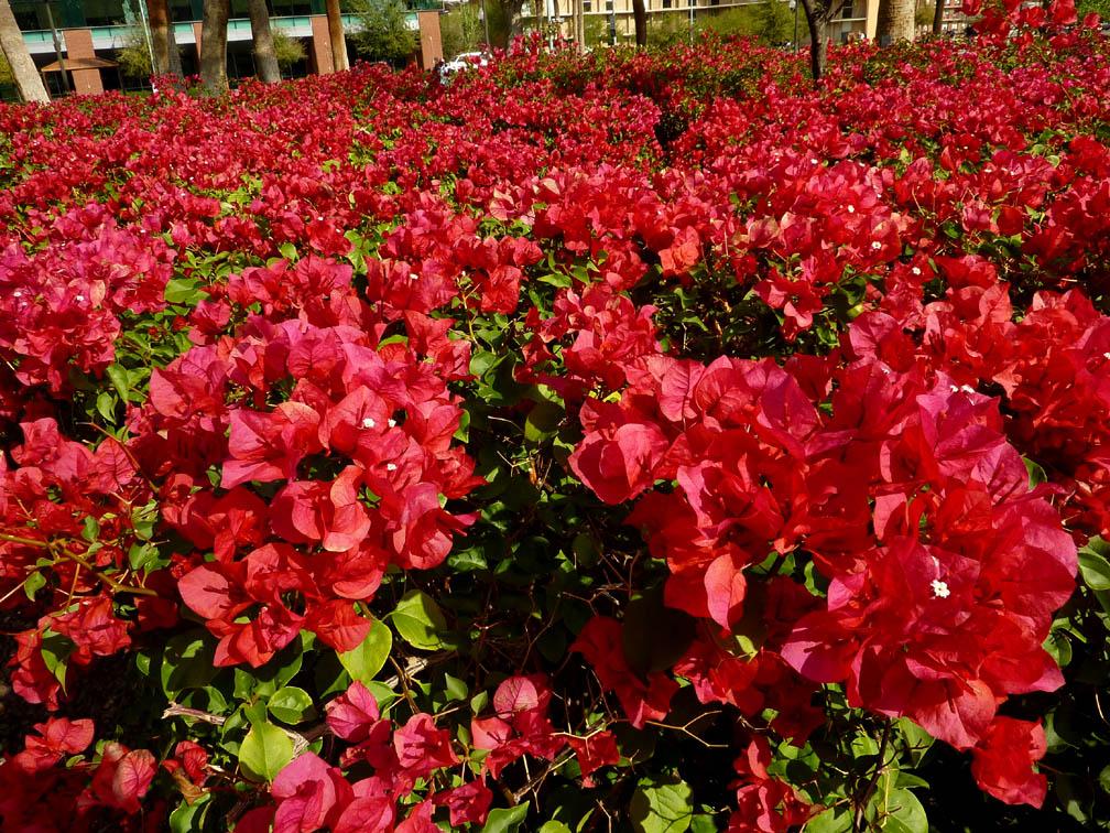 flores que gostam de sol : plantas que gostam de sol