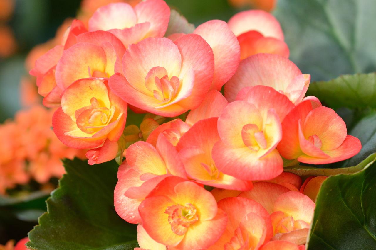 flores que gostam de sol : plantas resistentes ao sol