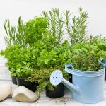 Horta em Vasos: Tudo o que Você Precisa Saber Para Ter a Sua