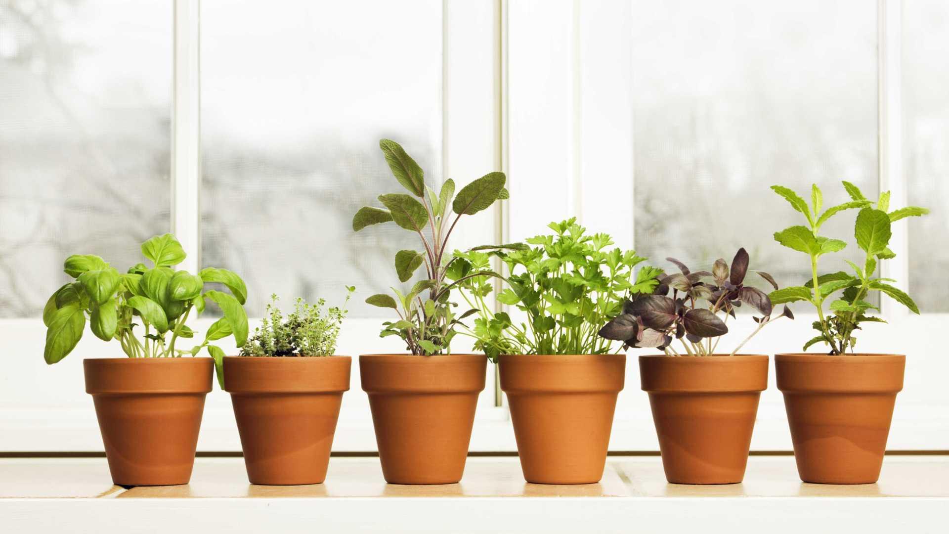 como fazer uma horta em vasos : como fazer horta