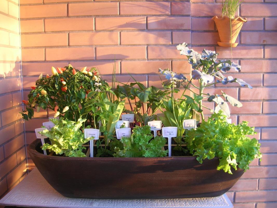 como fazer uma horta em vasos : ideias de horta