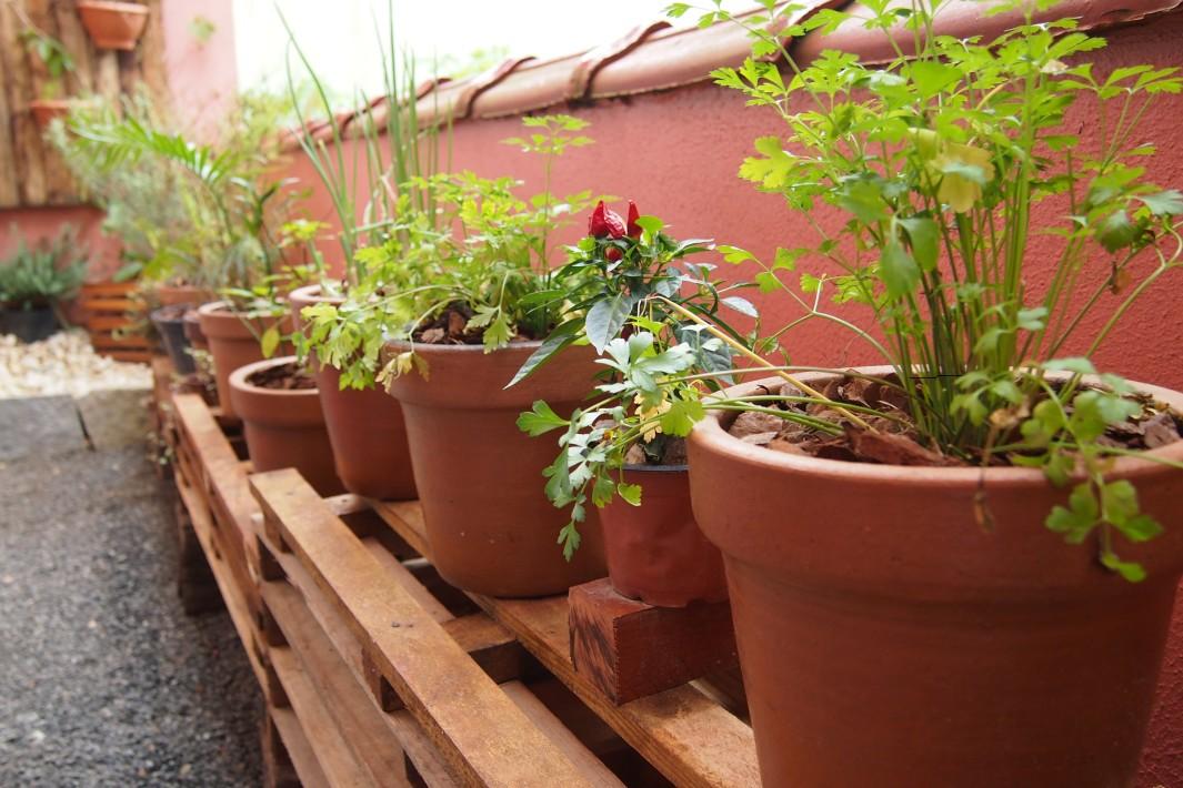 como fazer uma horta em vasos : plantas de casas