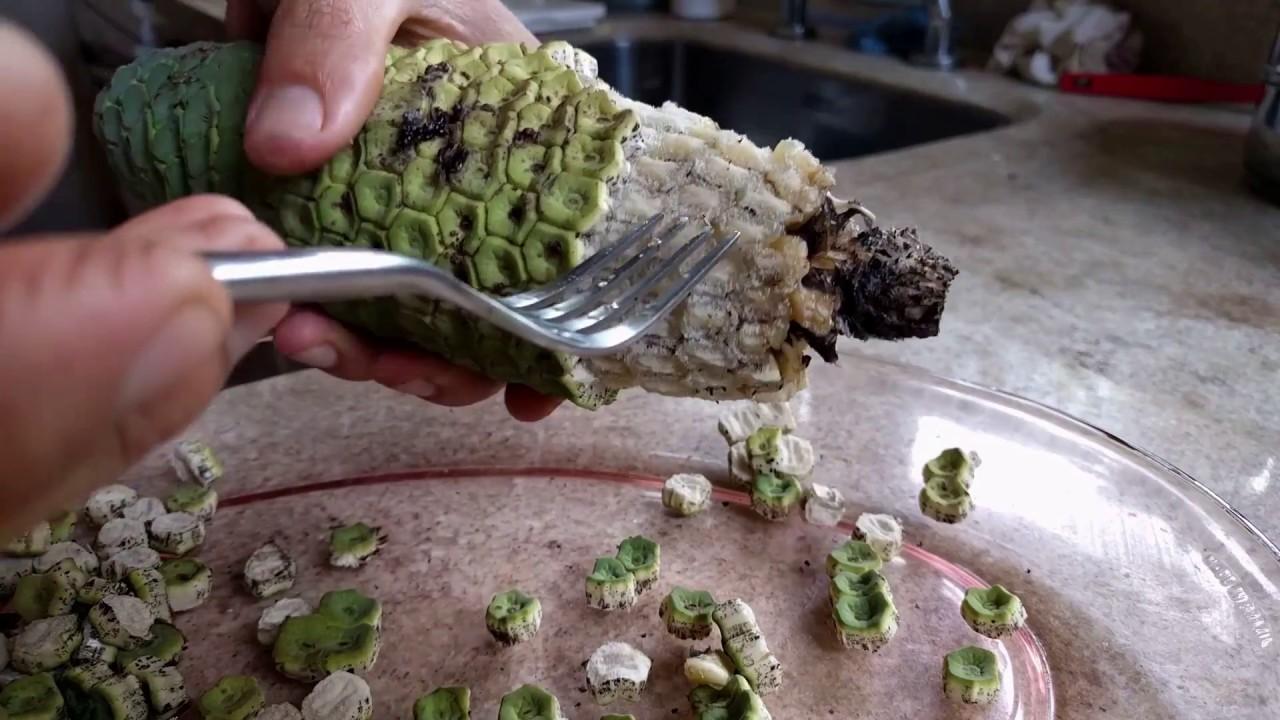 como plantar costela de adão orgânica : costela de adão planta medicinal