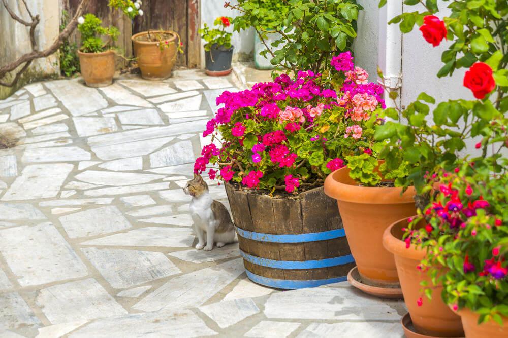 manta de bidim : vasos para plantas