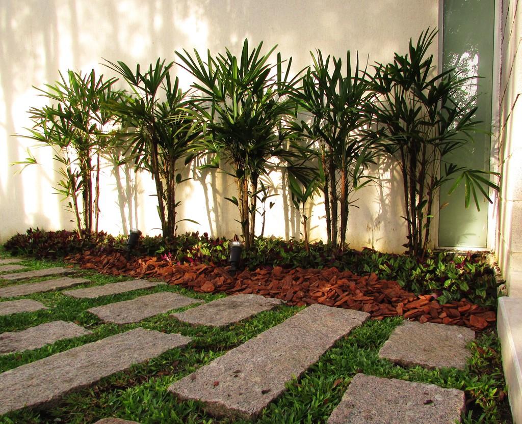 como plantar ráfia orgânica : palmeiras para jardim