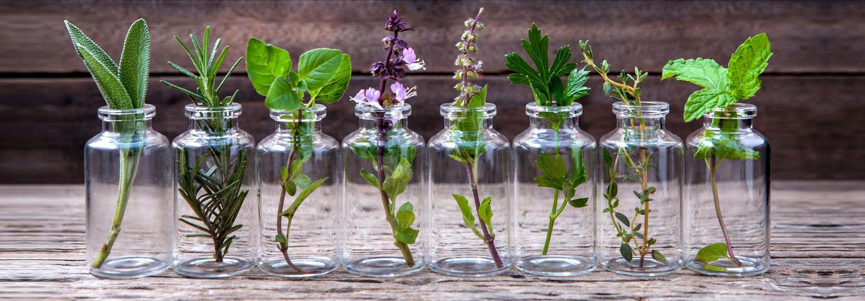 como enraizar plantas em água : o que é hidroponia