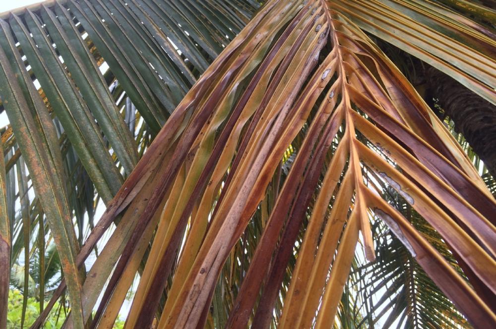 como plantar coco orgânico : fibras de coco para plantas como usar
