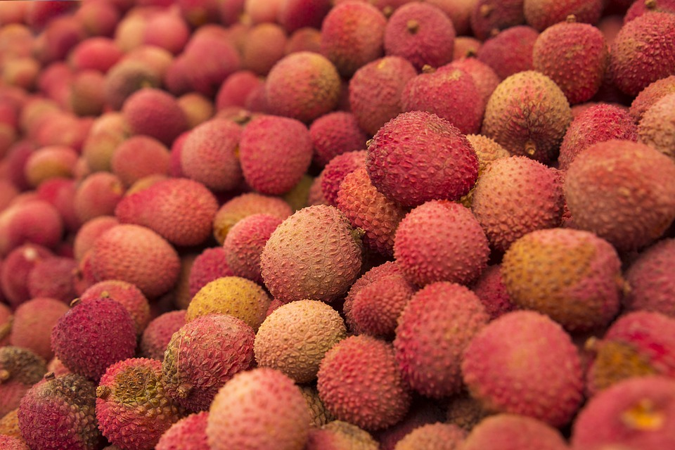 como plantar lichia orgânica : lichia fruta