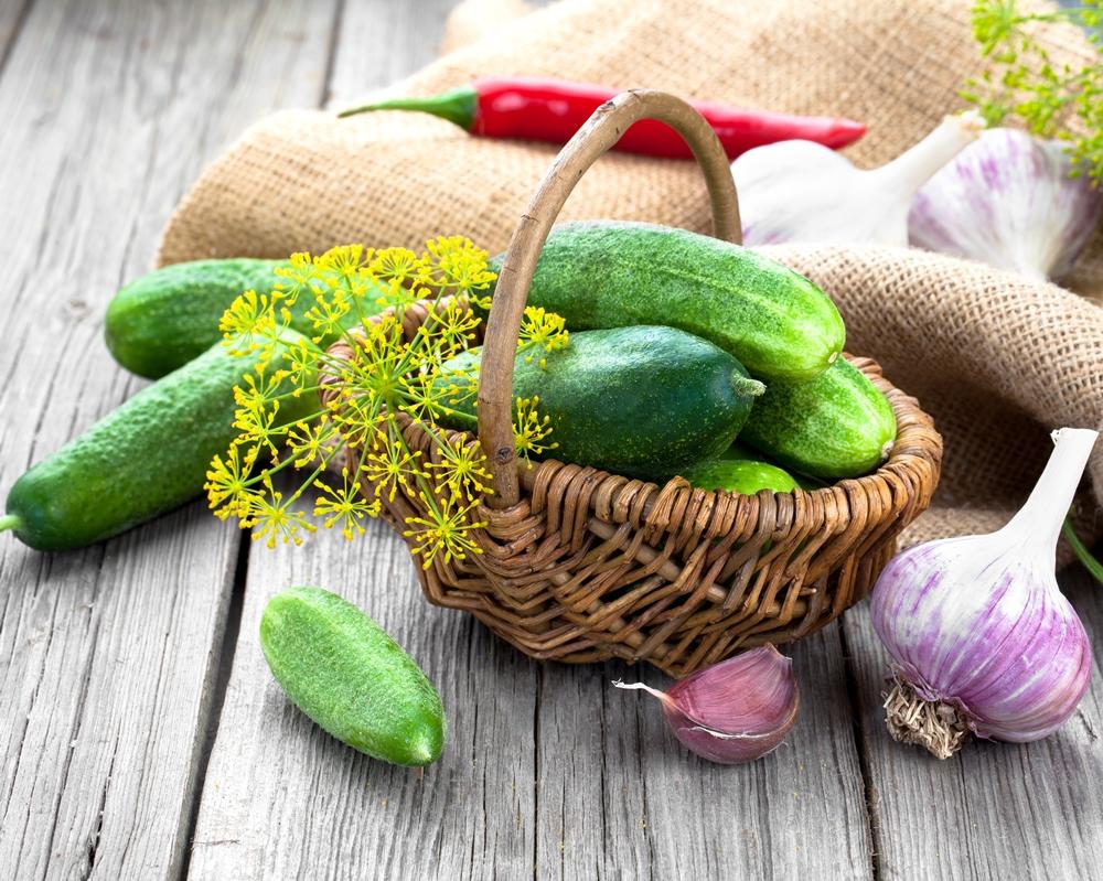 como plantar pepino orgânico : como plantar pepino em vaso