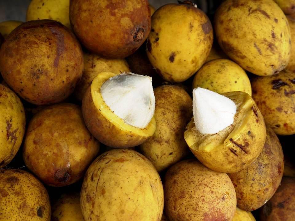 frutas exóticas brasileiras : bacuri