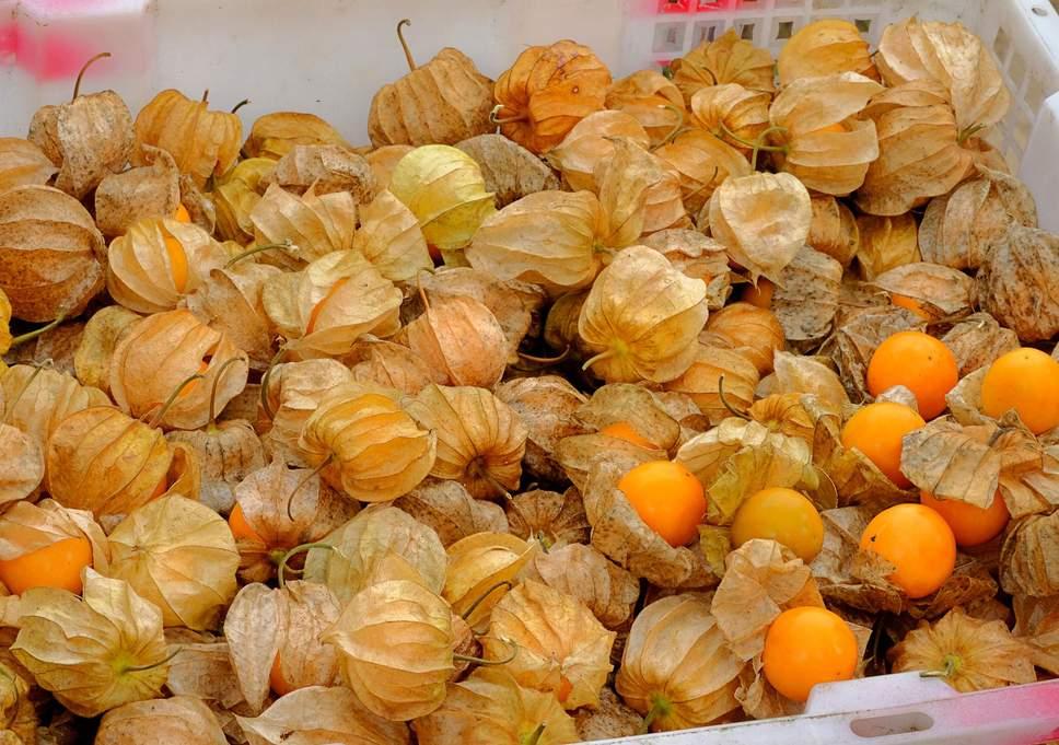 frutas exóticas brasileiras : frutas diuréticas