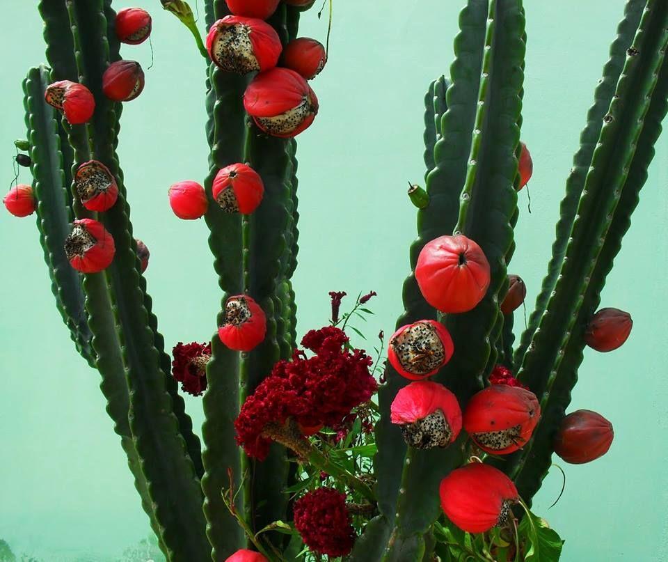 frutas exóticas brasileiras : frutas divertidas