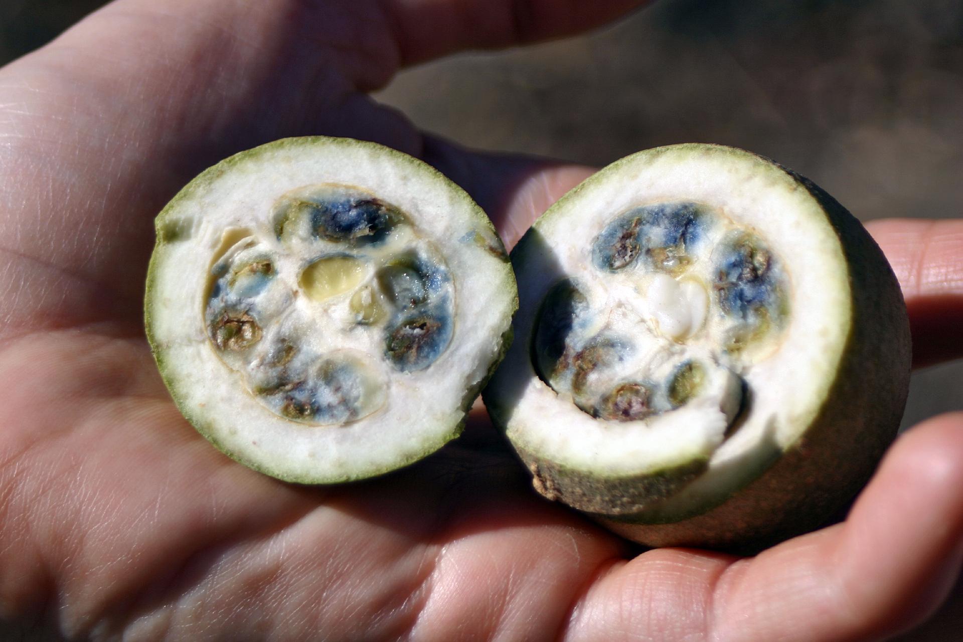 frutas exóticas brasileiras : frutas estranhas