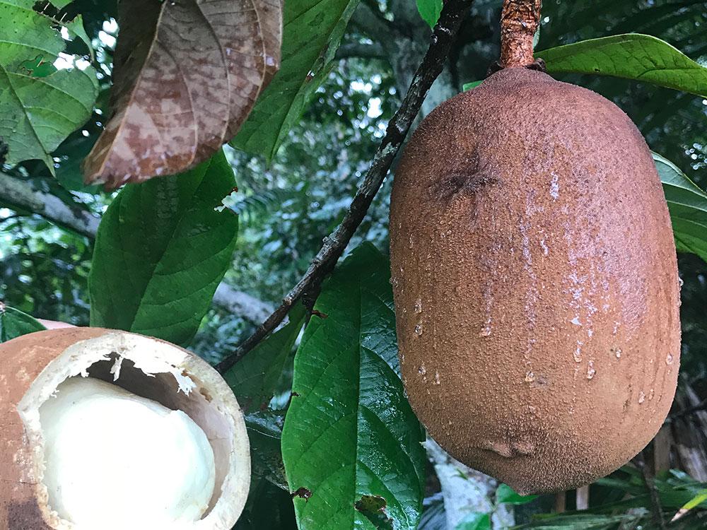 frutas exóticas brasileiras : frutas exóticas