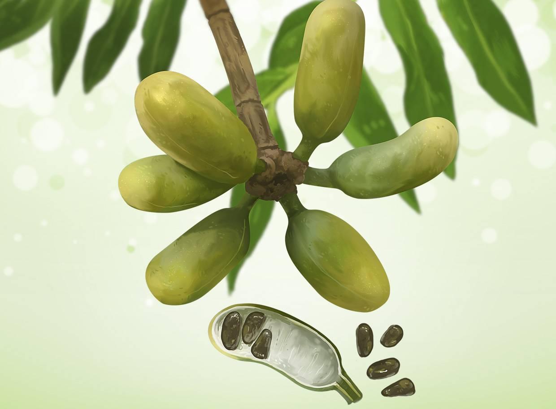 frutas exóticas brasileiras : frutas