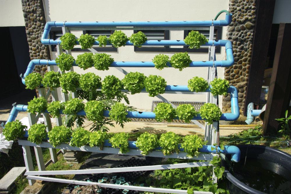hidroponia em casa : horta hidropônica