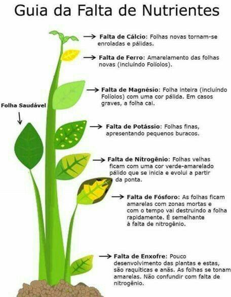 problemas mais frequentes encontrados em folhas : horta