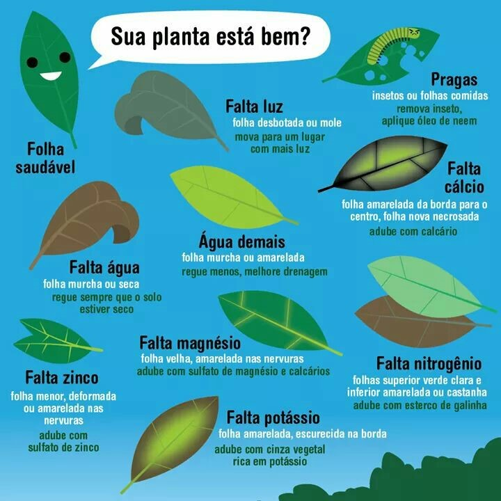 problemas mais frequentes encontrados em folhas : pragas