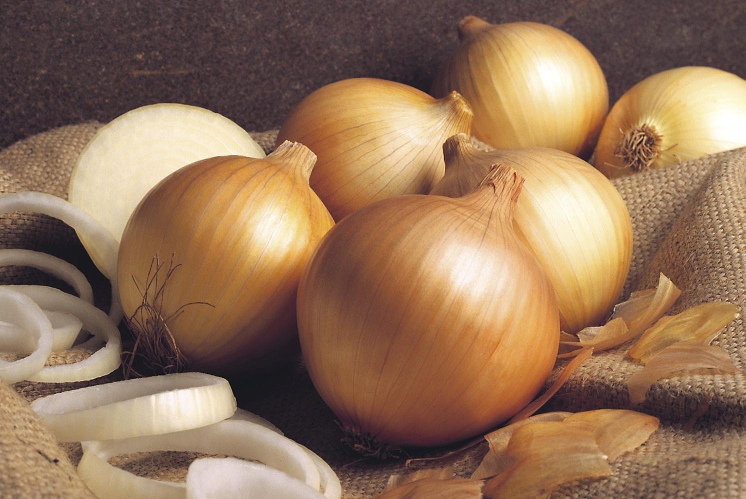 como plantar cebola orgânica : como plantar cebola de cabeça