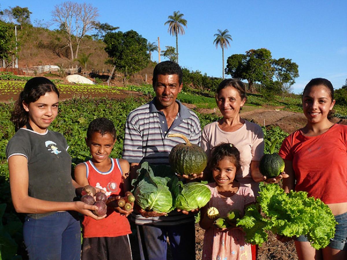 feira orgânica : alimentos orgânicos