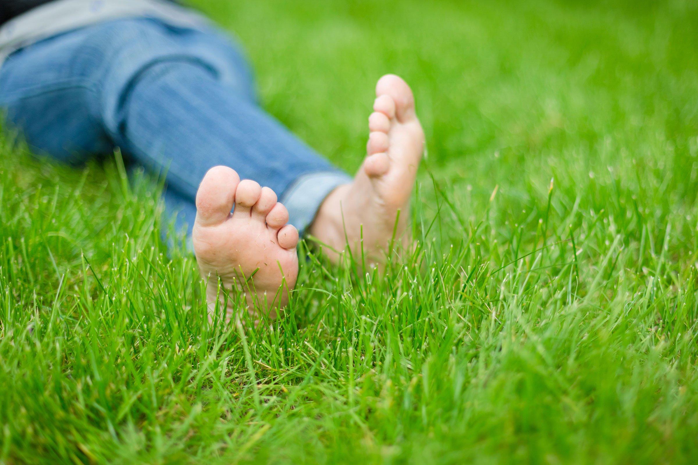 como plantar grama orgânica : grama de jardim orgânica
