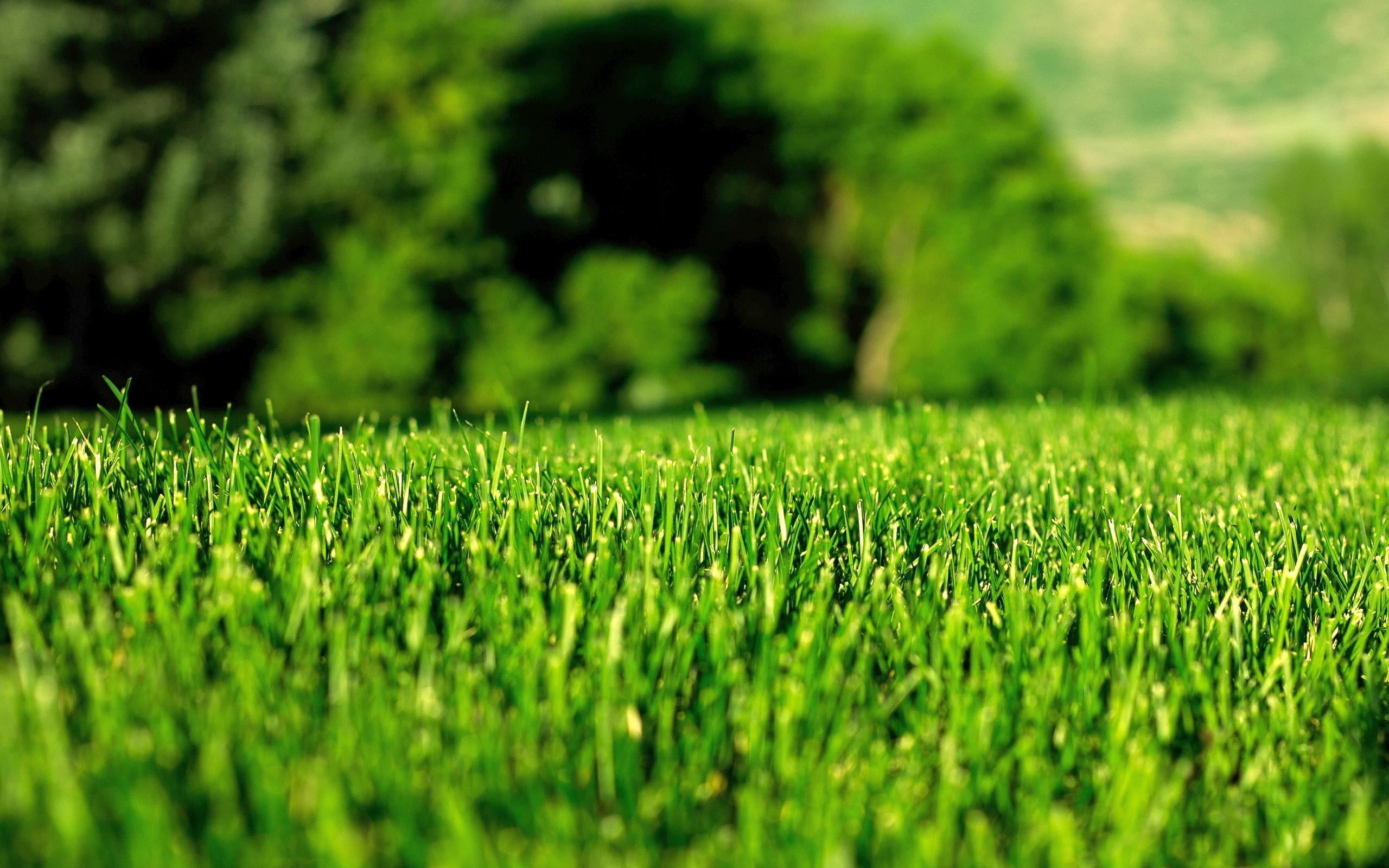 como plantar grama orgânica : terra adubada para grama