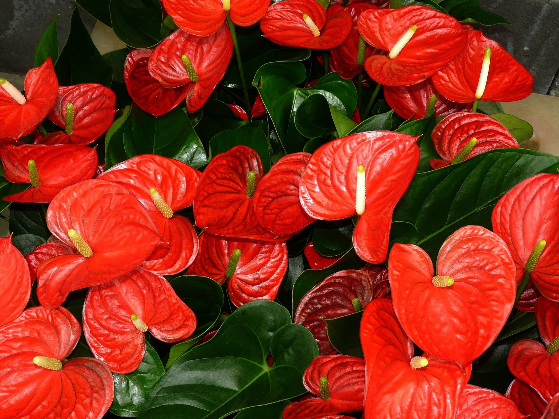 plantas que não precisam de sol : plantas que gostam de sombra