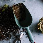 Como Cultivar Árvores Frutíferas em Vasos: Saiba Todos os Detalhes