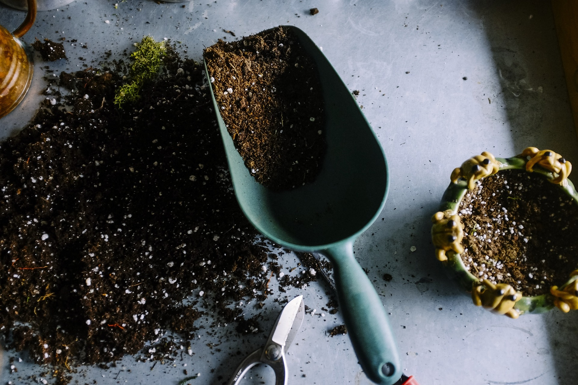 árvores frutíferas em vasos: mudas frutíferas