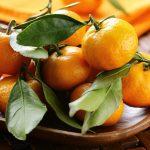 como plantar tangerina
