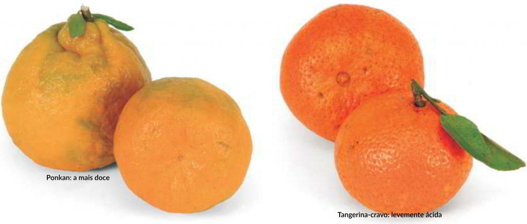 como plantar tangerina: ponkan