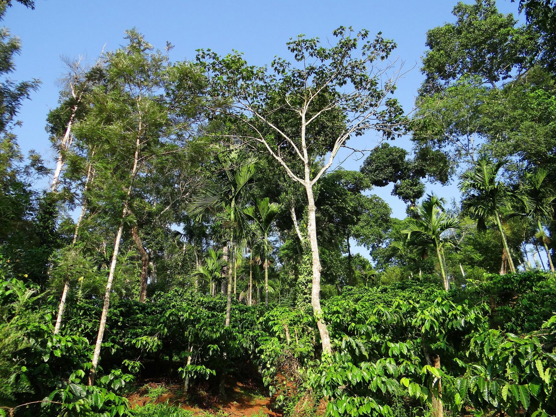 o que é agroecologia: agricultura orgânica