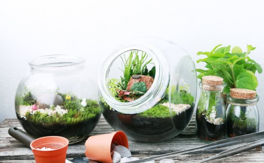 como fazer um terrário : terrário de plantas