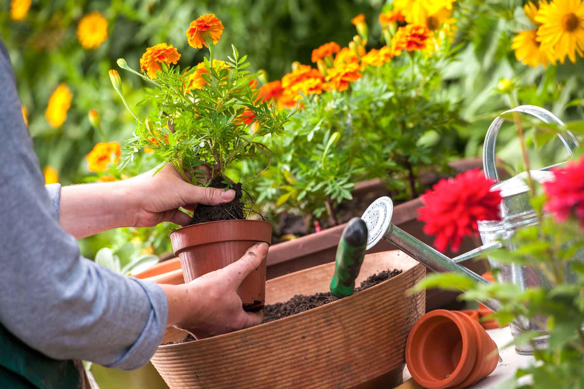 como plantar flores : horta