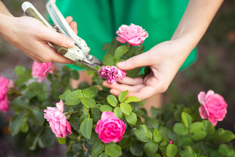 como plantar flores : hortas domésticas