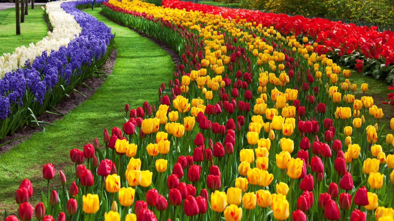 como plantar flores : plantas ornamentais